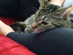 Maggie snuggling in Jeni's lap