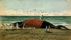 Flickr: An early watercolour painting depicting whaling activity on Mohaka Beach