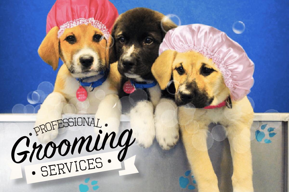 Ilmu Pengetahuan 8 Dog Grooming Pictures