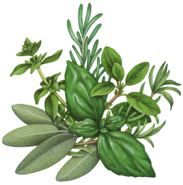 Culinary Herbs & Spi