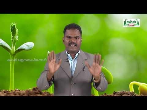 ஆய்வுக் கூடம் Std 8 Science தாவர உலகம் Part 01 Kalvi TV