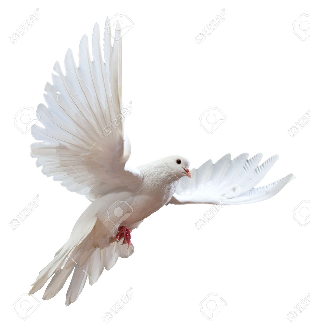 http://previews.123rf.com/images/irochka/irochka1103/irochka110300199/9039421-A-free-flying-white-dove-isolated-on-a-white-background-Stock-Photo.jpg