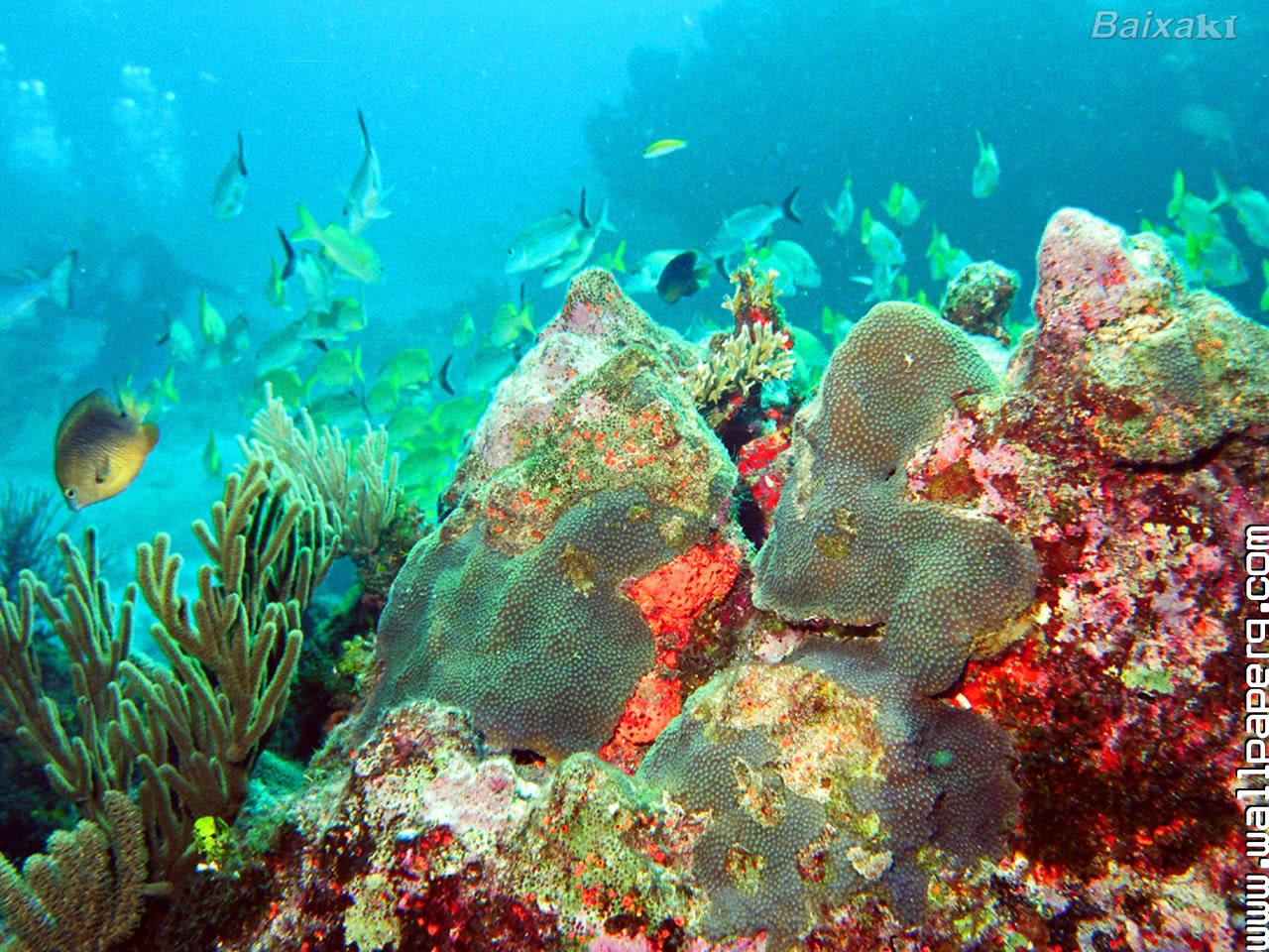 Download Cancun Fundo Do Mar Underwater World Mobile Version