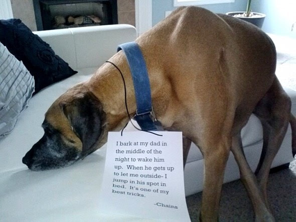 6.17.16 - Dog Shaming - Father's Day Edition10