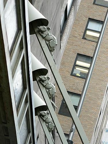 Rats, New York