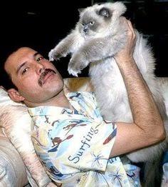 Las adorables imágenes de Freddie Mercury, amó a sus gatos como si fueran sus propios hijos