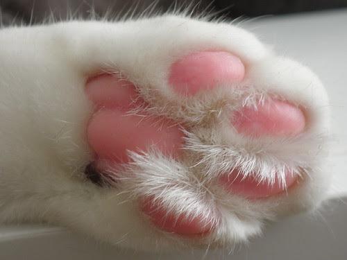Sona's paw