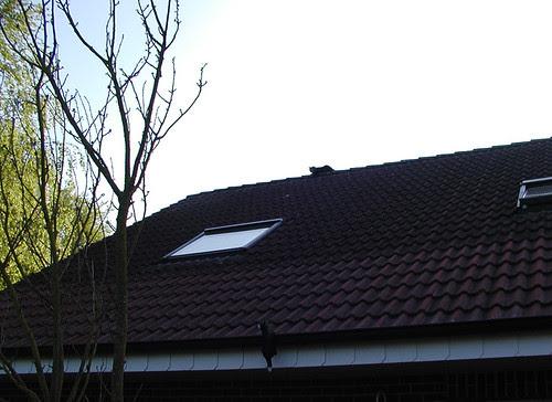 Doppie op de nok van het dak!