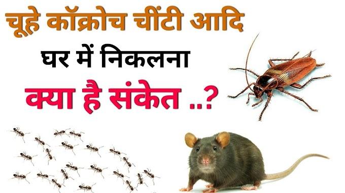घर में नहीं रहेंगे एक भी कॉक्रोच, चूहा और चींटी, गज़ब के हैं ये 10 टिप्स #Lifestyle