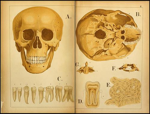 atlas anatomie enfant 10 Atlas anatomique pour écoliers en 1879  information histoire design