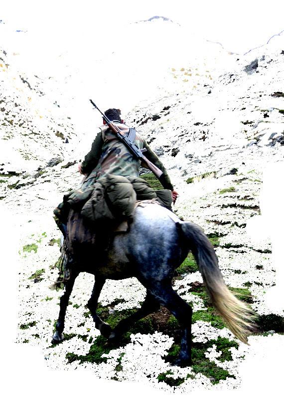 horse-thie1