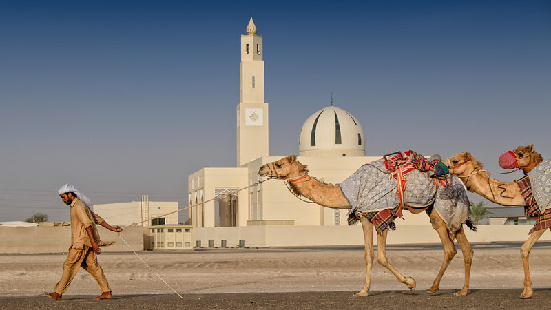 2014 Pic(k) of the week 17: Walking the camels