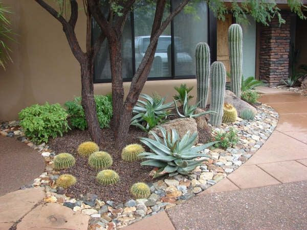 Ideas for Front Yard Desert Landscaping Arizona