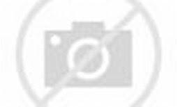 Image result for animas river photos