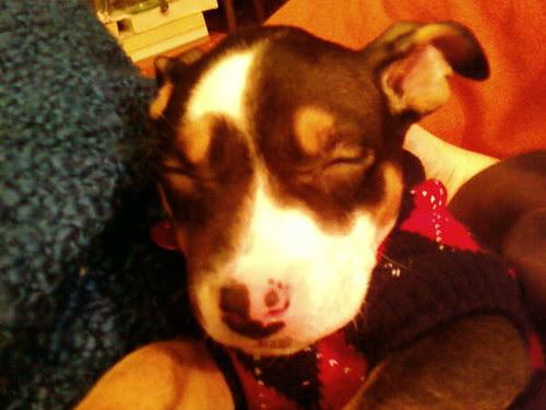 Koira_Asleep