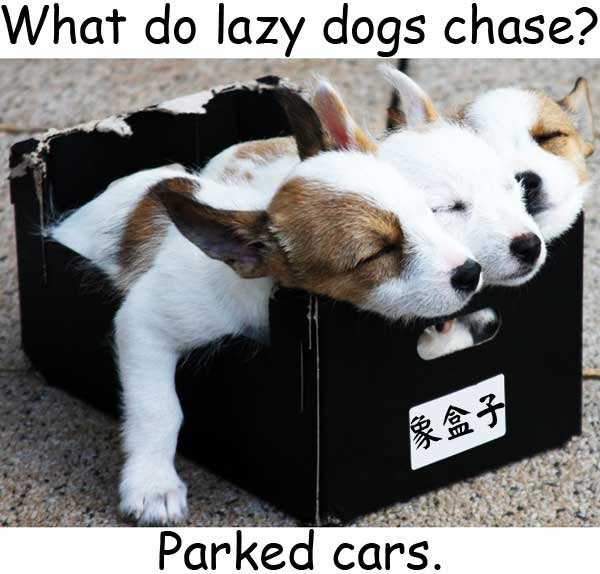 lazy dogs parked cars