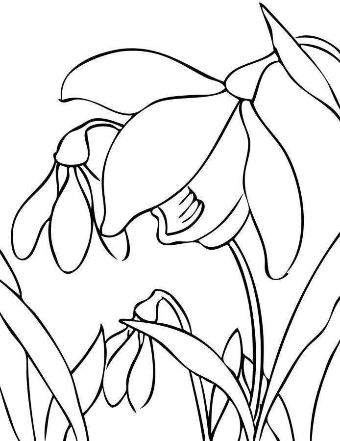 Free Spring Flowers To Color And Print Download Free Clip Art Free Clip Art On Clipart Library