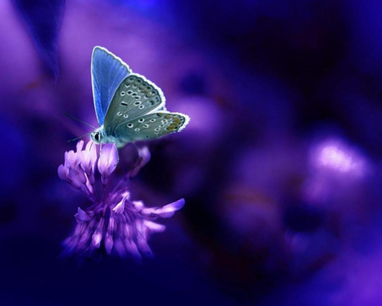 Purple Butterfly Backgrounds - Wallpaper Cave