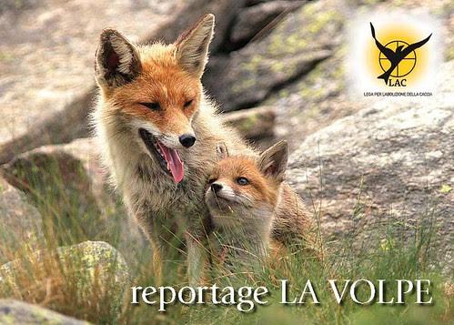 copertina Reportage_La_Volpe