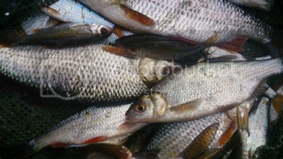 photo MidNov_20144_zpsa569068c.jpg