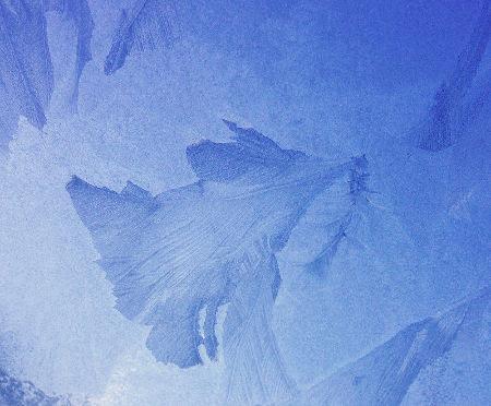 ice-dove.jpg