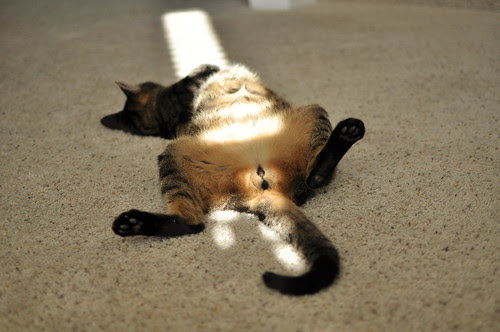 post-turkey nap