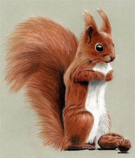 cute squirrel drawing  colored pencils  jasminasusak