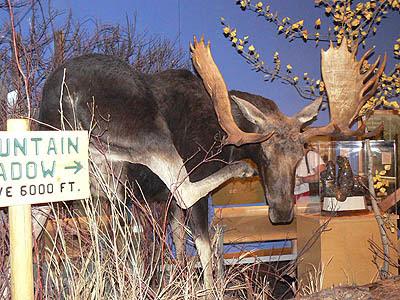 moose cody.jpg