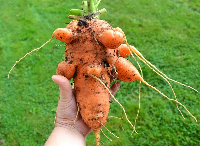 Monstrous Carrots