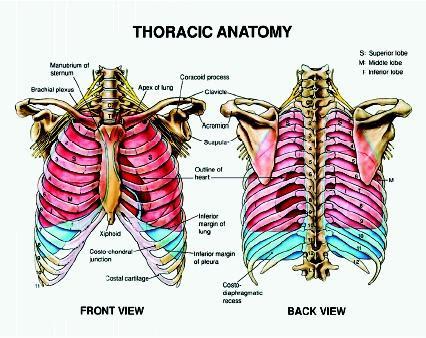 Design: parts of the skeletal system - The Skeletal System ...