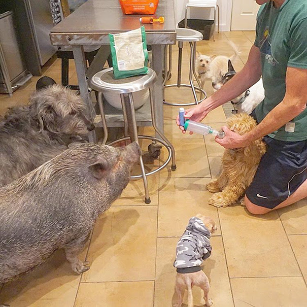 man-adopts-senior-dogs-shelter-steve-greig-142