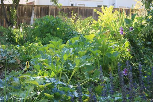 Vegetable garden by alison.toon