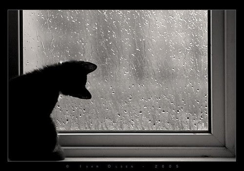 animal, animals, black, cat, cats, curious, cute, fun, funny, i like black cat!, kitten, kittens, nice, photography, rain, strange, window, windows