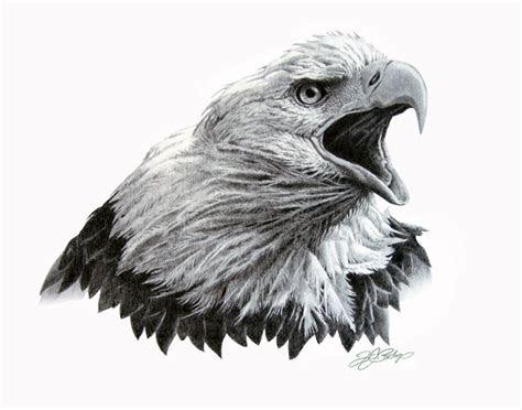 bald eagle sketches home original artwork eagle head
