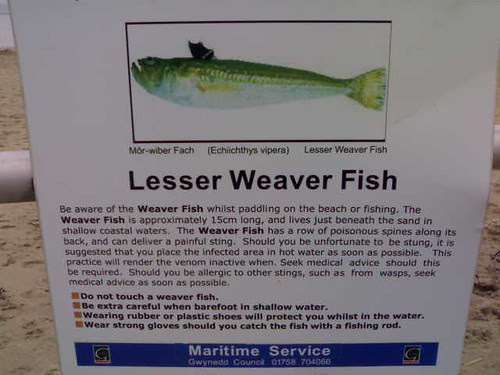 Beware The Lesser Weaver Fish  Hugovk Flickr