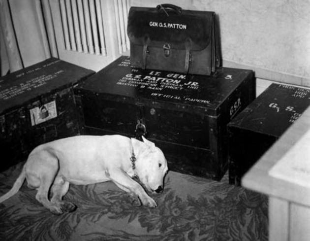General George S Pattons dog on the day of his death