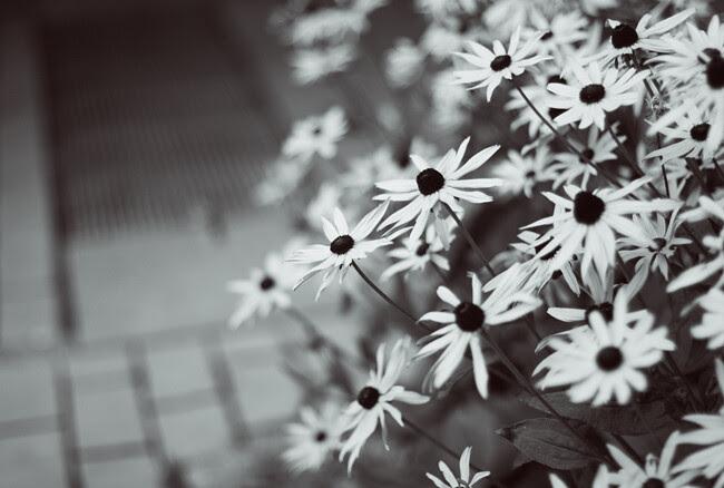 kukkapieni