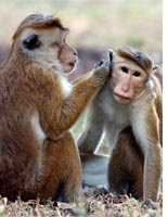 Monkeys. Click image to expand.