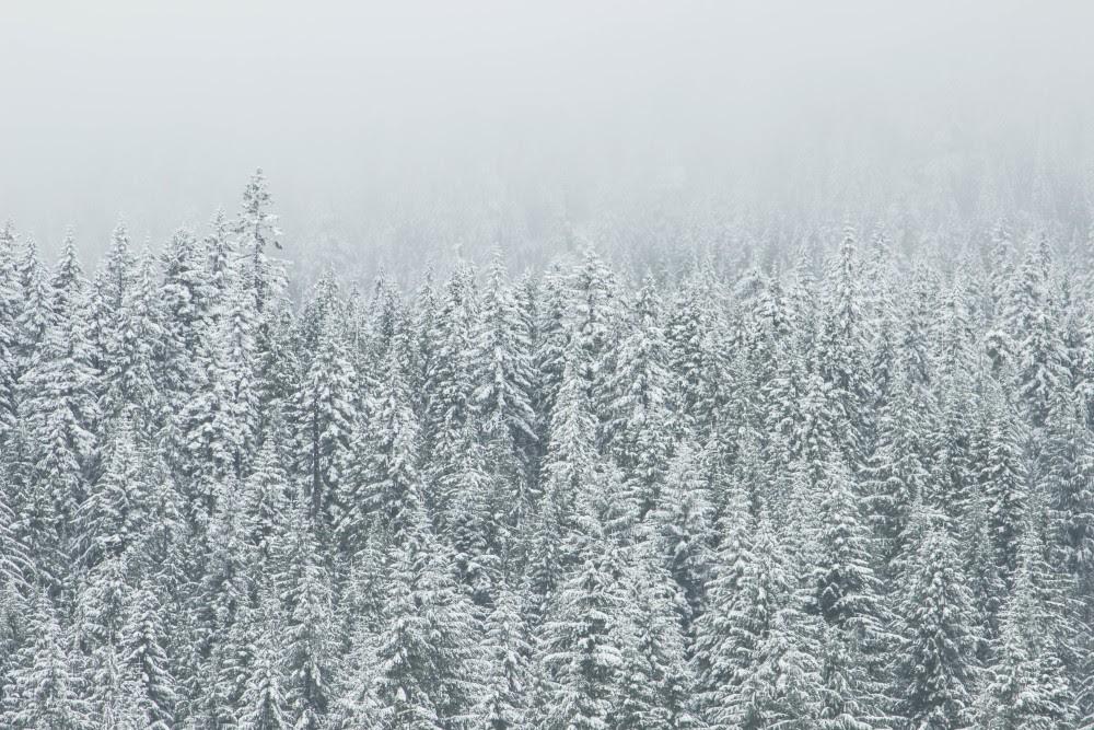 Public Domain Images – Winter White Snow Trees