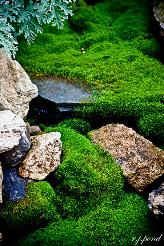 ~ Green Peace ~