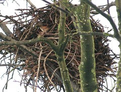 Is this my nest?