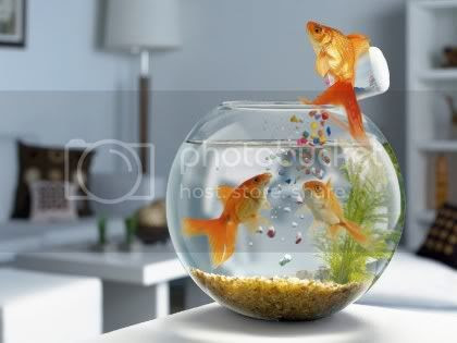fish photo: Feeding fish Goldfish.jpg