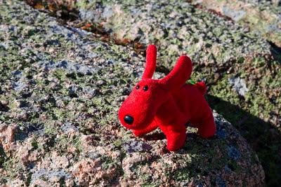 Rover at Acadia National Park