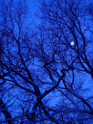 Moon, snow, trees — 7:26 a.m.