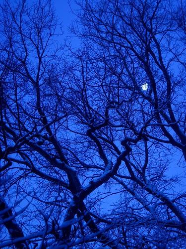 Moon, snow, trees — 7:26 a.m.