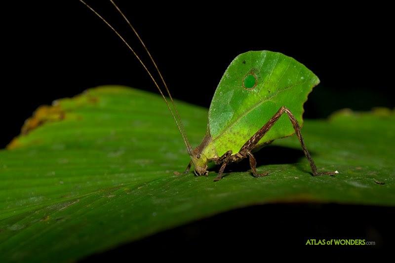 Insecto camuflado