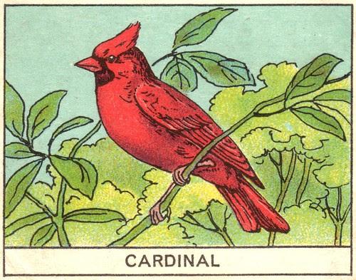 oiseaux mart 8