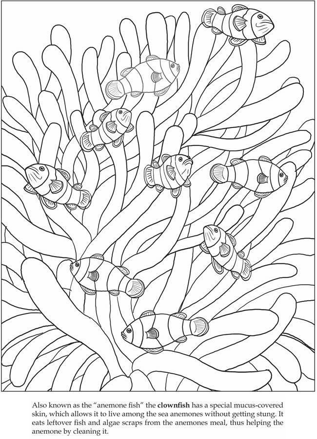 color it clown fish | Animals Coloring Pages. | Pinterest