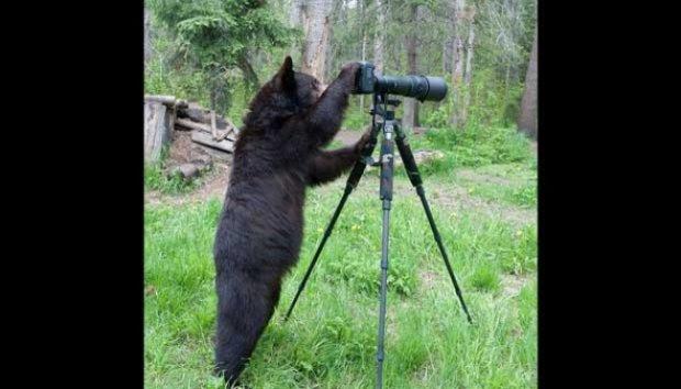 Beruang Hitam Ini Berbakat Jadi Fotografer