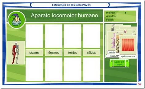 Aparato locomotor humano